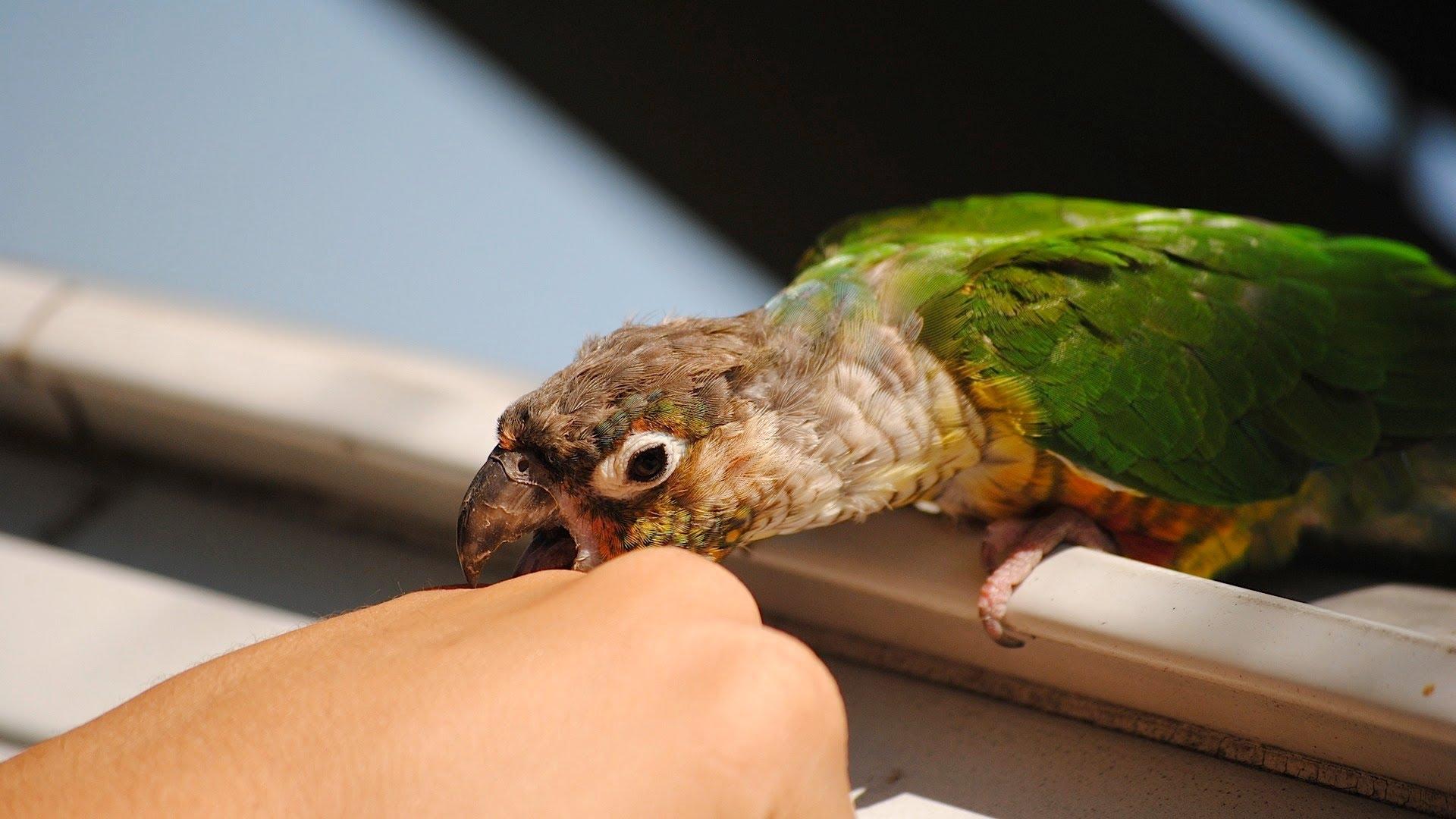 Vogel Training op Hoger Niveau